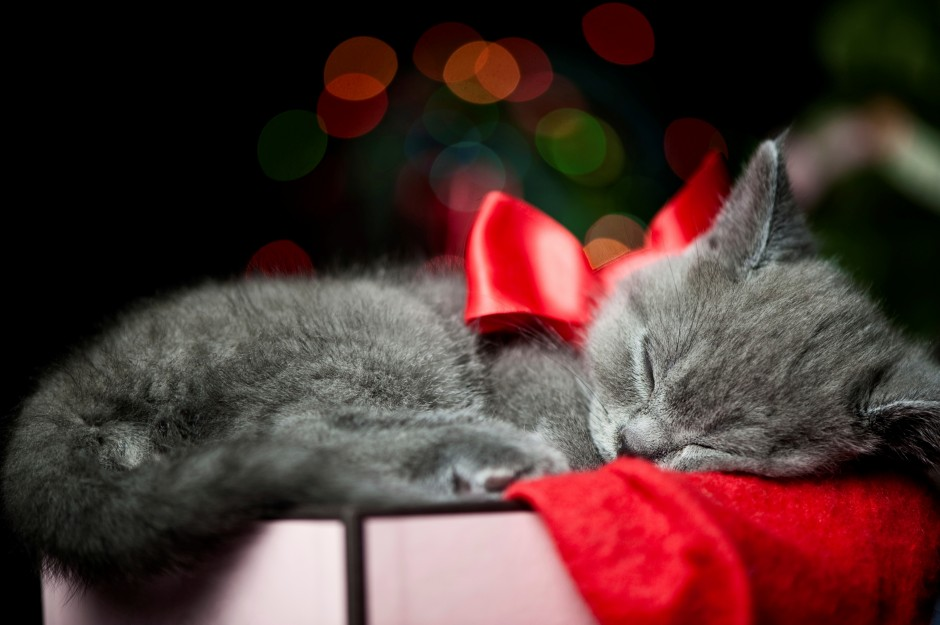 cat-kitten-black-sleeping-ribbon-bow-box